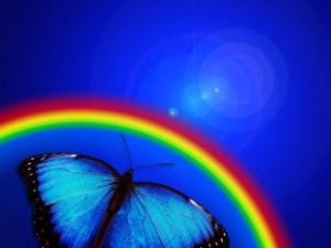 butterfly-765126_1920