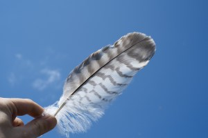 feather-690512_1280