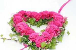 roses-743714_1920