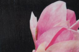 Wazon w magnolie