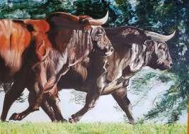 Toro nº 4