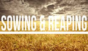 Sowing and Reaping | Bible Answers for Daily Living