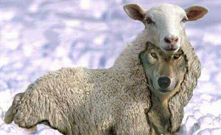 In Sheep S Clothing Saying
