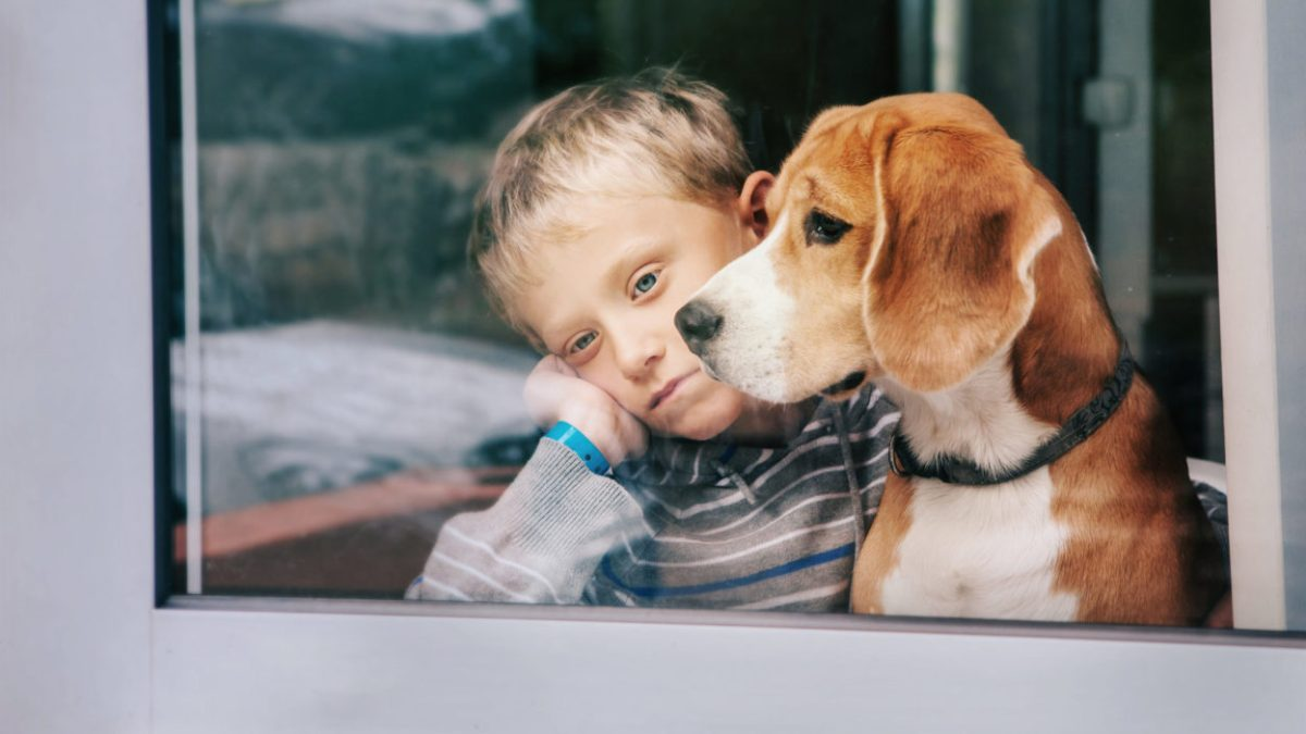 boy and his dog looking out the window