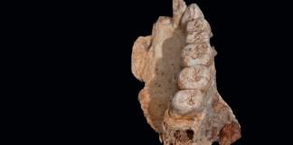 Людская миграция из Африки произошла на 40 000 лет раньше, чем мы думали
