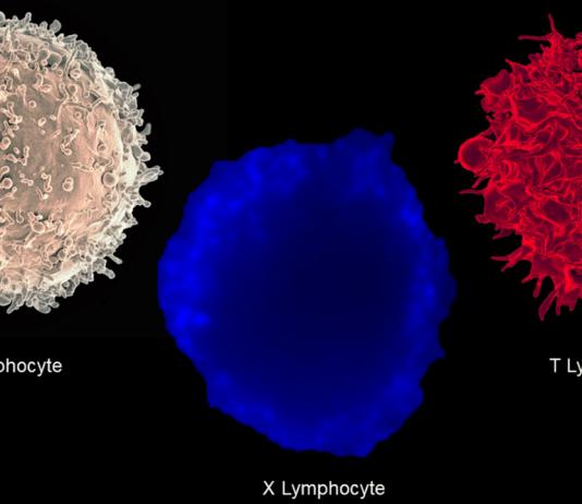 Новый тип иммунных клеток обнаружен у пациентов с диабетом 1-го типа