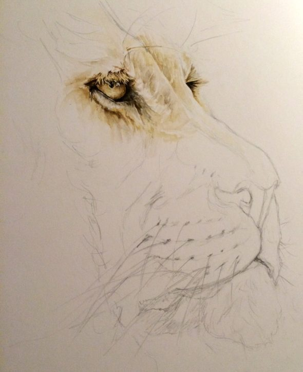 The Lion, Progress shot #1.