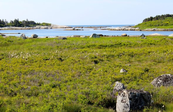 The interesting terrain on the road to Peggy's Cove.