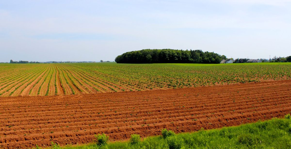 The rich red soils of PEI.