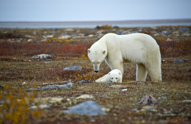 Top 10 Wildlife Encounters in Manitoba