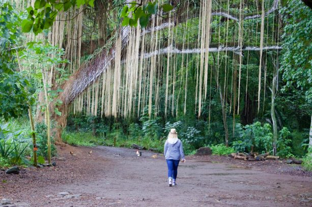 Honolua Bay, Maui