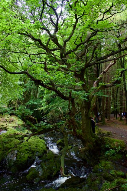 Tollymore Forest, Game of Thrones Tours, Ireland