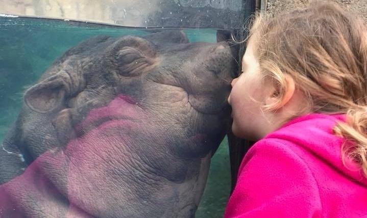 Fiona the hippo likes kisses
