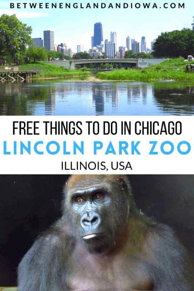 Free Things To Do In Chicago: Lincoln Park Zoo USA