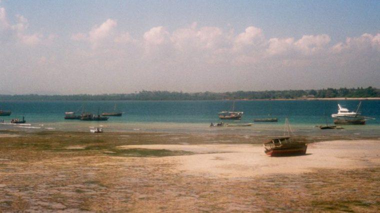 Mombasa Wasini Island Kenya