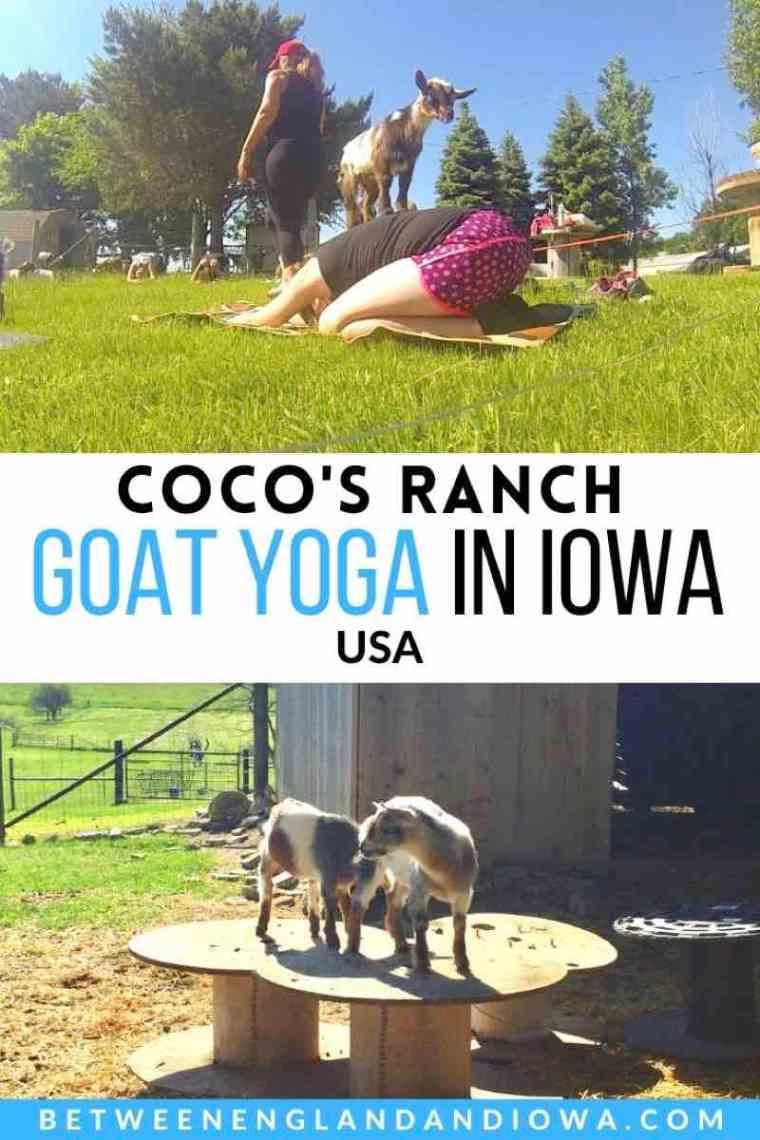 Goat Yoga Iowa