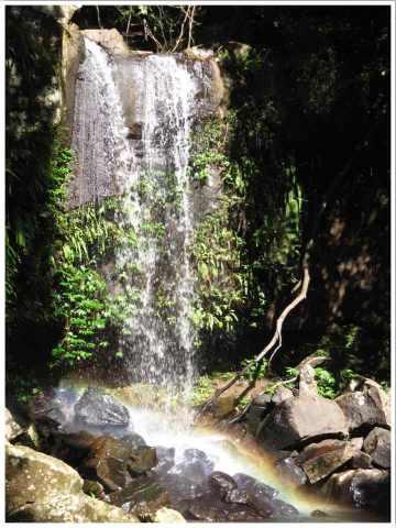 Curtis Falls Tamborine National Park Gold Coast Australia. Tamborine Mountain near Surfer's Paradise