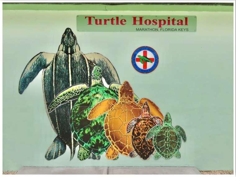 Turtle Hospital Marathon Florida Keys
