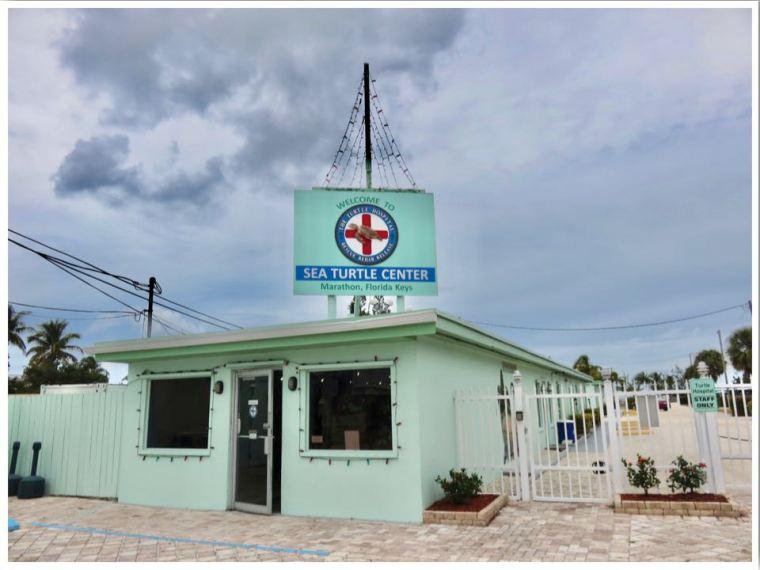 The Turtle Hospital Marathon Florida Keys