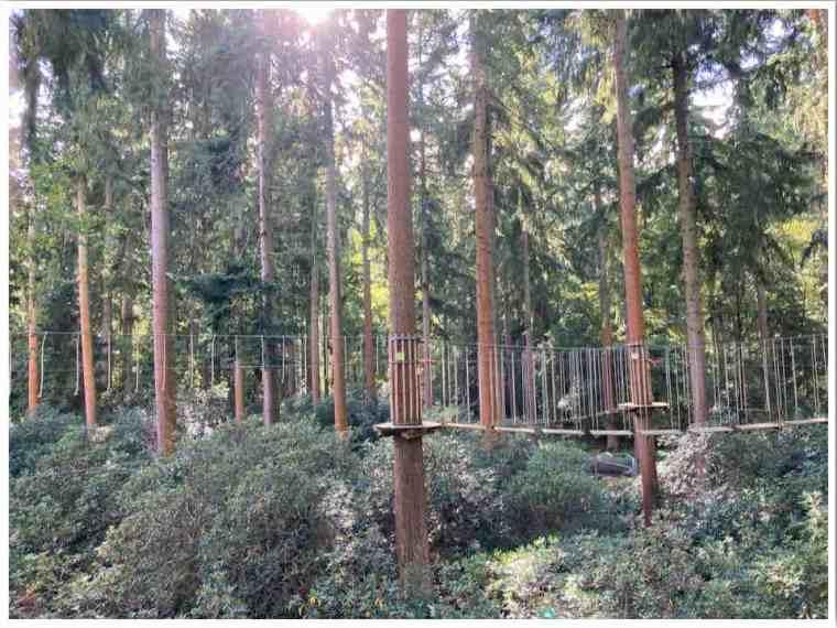 Go Ape Treetop Challenge Thetford Forest UK