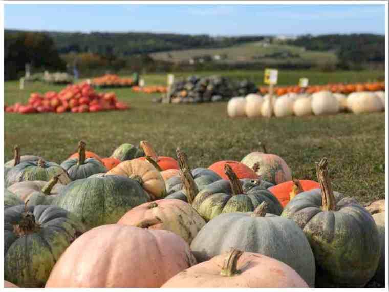 Midwest Fall Pumpkins Petoskey MI by Kylie