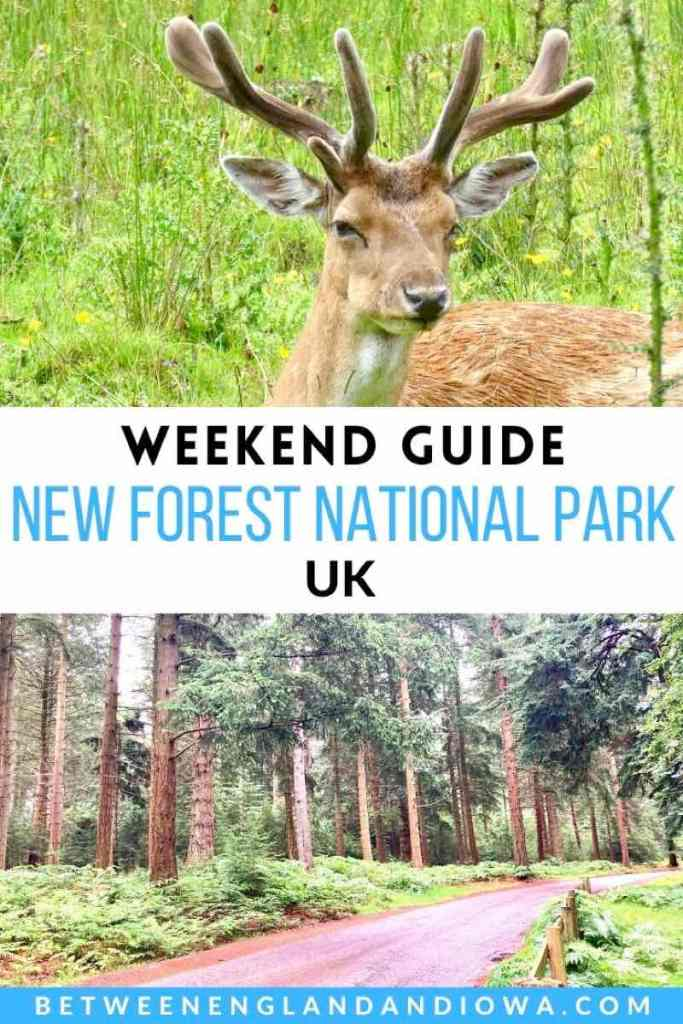 New Forest Weekend Away