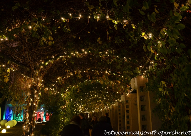 Atlanta Botanical Gardens Christmas Garden Lights