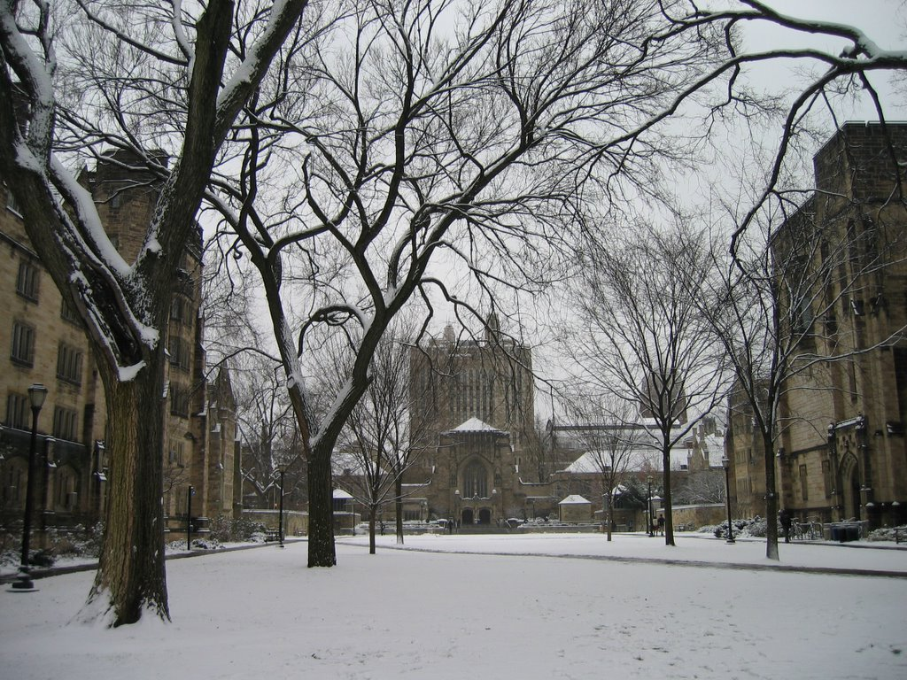 Winter in New Haven