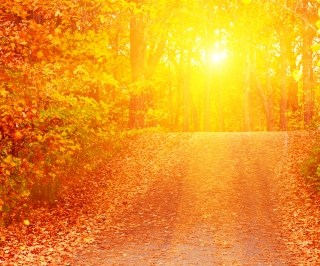 8 Fun facts about fall