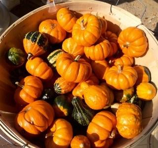 Interesting pumpkin facts for October fun