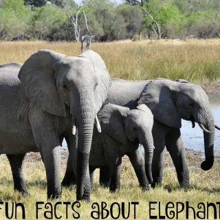 Fun facts about elephants for World Elephant Day