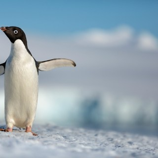 See the adorable trailer for Penguins by Disneynature (and meet my spirit animal)