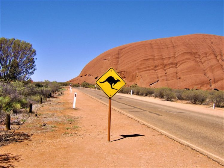 Mind the kangaroo sign, beside the road near Ayres Rock, in Australia