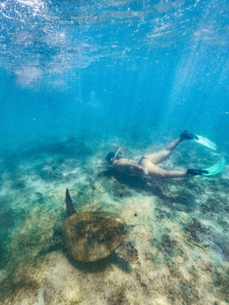 You can do snorkelling with Turtles at some of the best beaches in Sri Lanka by Greta Travels