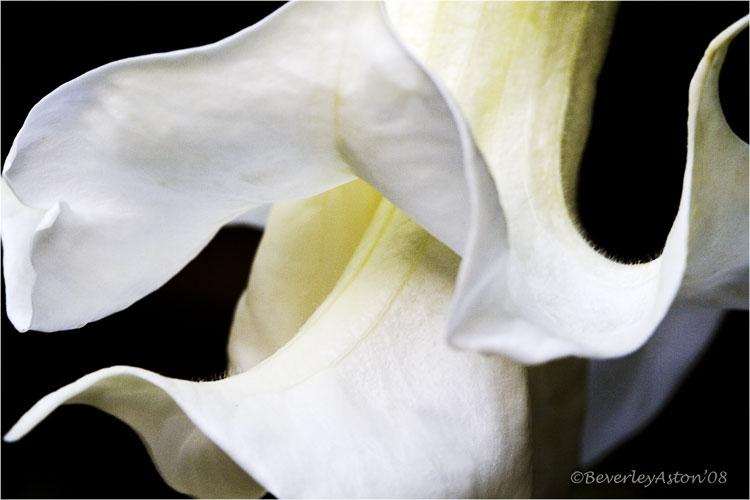 whiteflower21