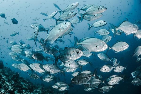 Seaspiracy poisson