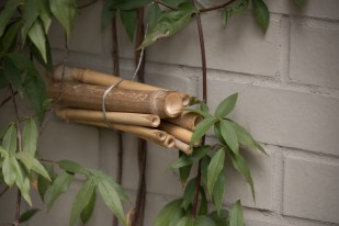 Tied together, these hollow bamboo sticks will give a native bee a home