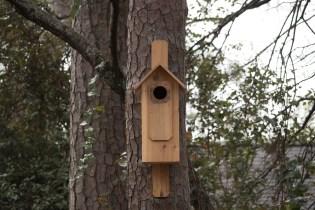 Pileated Woodpecker house