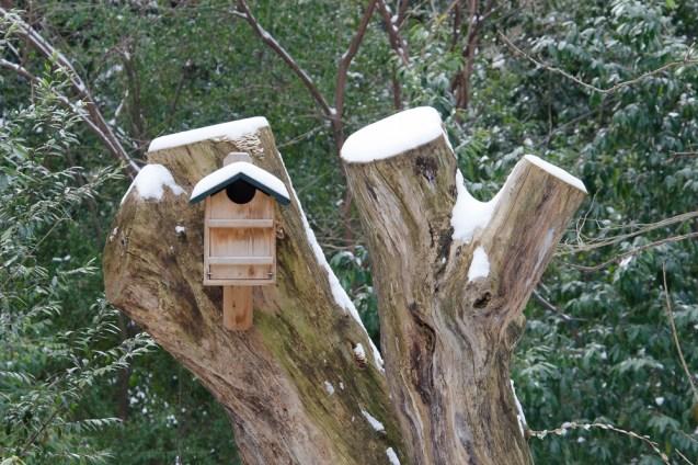 Barred Owl house