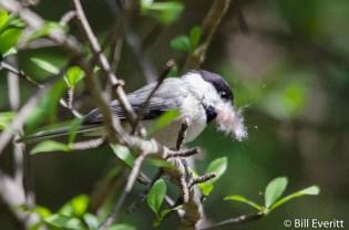 A little nesting material