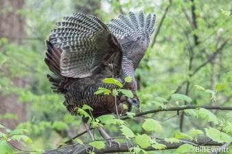 Wild Turkey Peachtree Park - April 7, 2017
