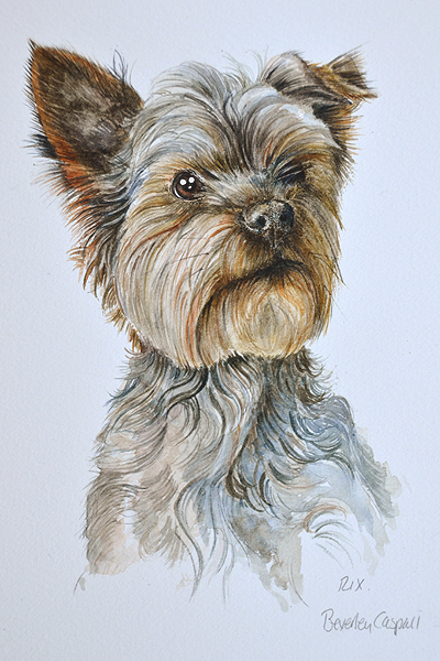 yorshire-terrier