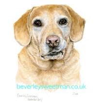 Golden Labrador watercolour painting