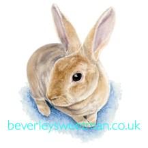 Rabbit watercolour painting