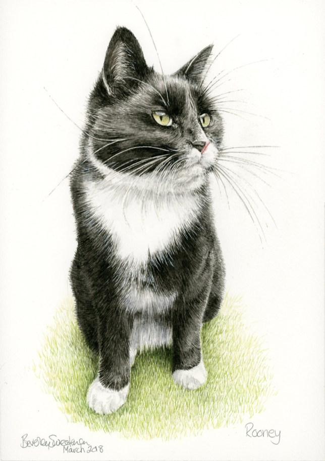 Black and white cat watercolour painting