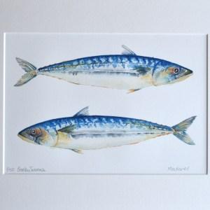 Blue Mackerels watercolour paint limited edition print