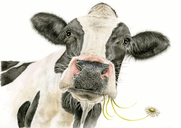 Daisy cow watercolour painting