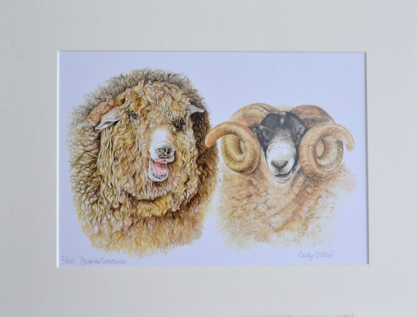 Rare breed sheep watercolour paint limited edition print
