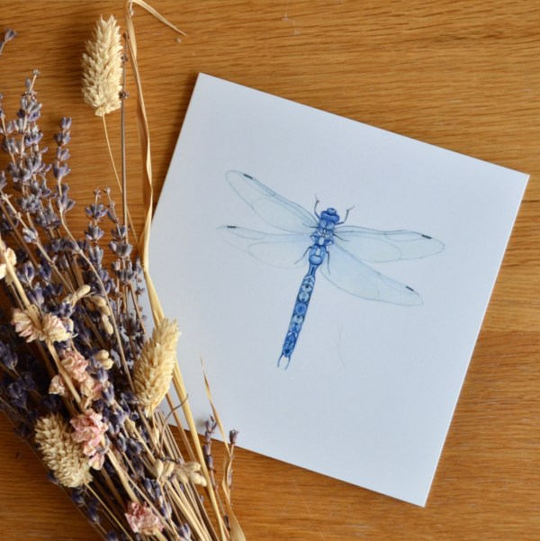 blue-dragonfly-card