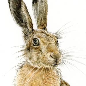 MAD MARCH HARE 10% OFF